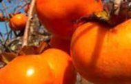 کاهش چین و چروک پوست با ماسک این میوه پاییزی